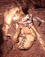 A fossilised example of the genus Australopithecus