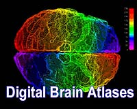 A researcher working with her own set of images - typically taken from a set of brain sections - can, working back and forth from the software, integrate them with atlas pages, once the exact brain location of the section has been recognized. To do this, the research superimposes her research images on top of the appropriate atlas page and then saves the superimposition as a copy.