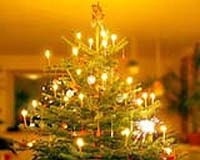 denmark produces between eight and nine million normann firs annually 90 percent of which are exported within europe primarily to germany britain - European Christmas Tree