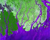 EO image of the Ganges River Delta, in which the Sunderban islands are located.