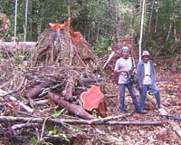The Drivers Of Tropical Deforestation Are Changing from makeahistory.com