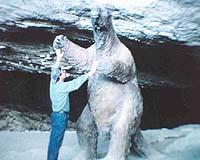 mammals like 12 foot tall